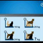 【画像】インテル入ってる?頭の柔らかい人は30秒で解ける動物クイズが話題