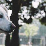 殺処分ゼロを願う絵本「ある犬のおはなし」一人でも多くの人に知ってもらいたい命の話
